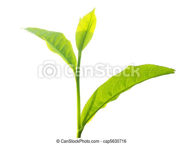 Tea leaves - csp5630716