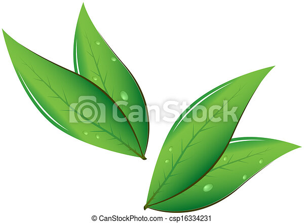 Tea leaves vector illustration vectors search clip art tea leaves vector illustration thecheapjerseys Image collections