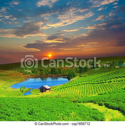 Tea plantation - csp1856712