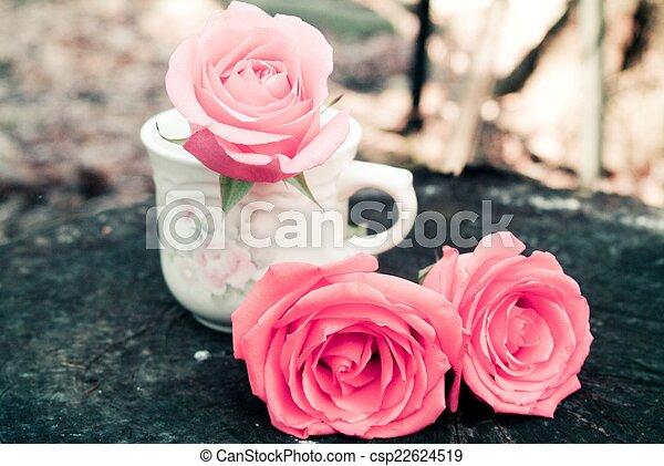 Tea Roses - csp22624519