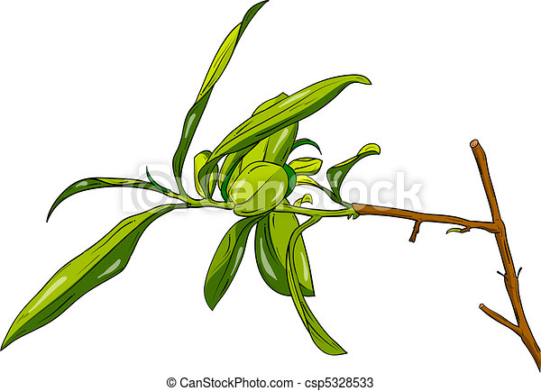 Tea Tree Plant Isolated On The White