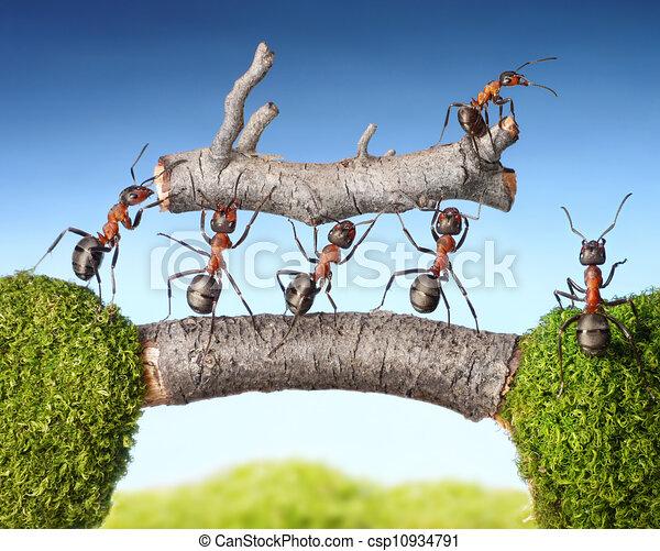 team of ants carry log on bridge, teamwork - csp10934791