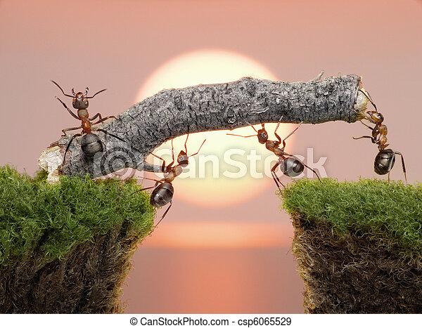 team of ants constructing bridge over water on sunrise - csp6065529