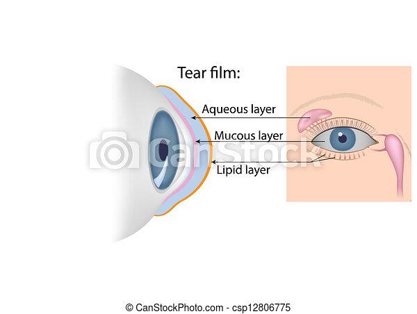 Tears chemical composition, eps10 - csp12806775