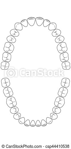 teeth chart tooth - csp44410538