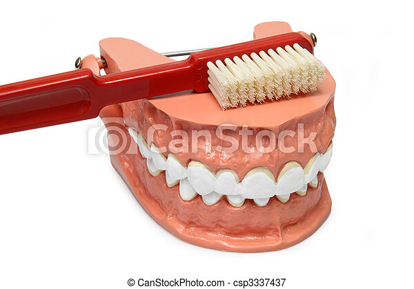 Teeth model - csp3337437