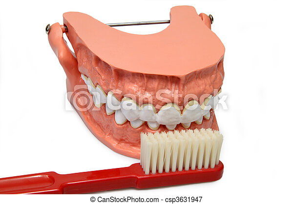 Teeth model - csp3631947