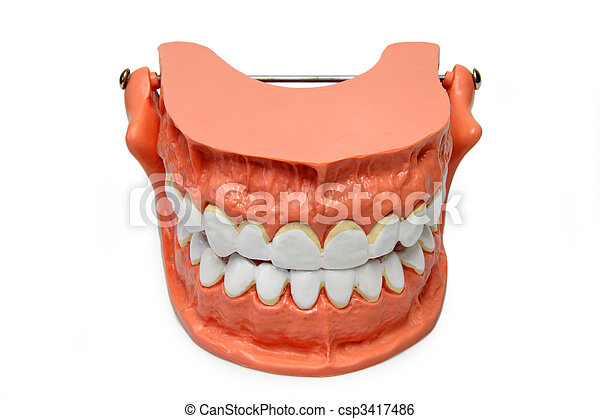 Teeth model - csp3417486