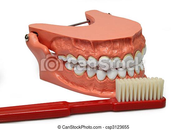 Teeth model - csp3123655
