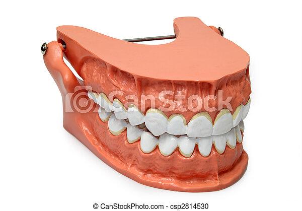 Teeth model - csp2814530