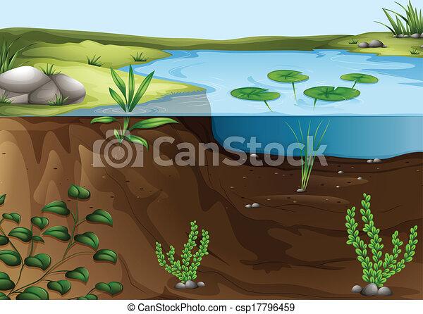 teich, ökosystem - csp17796459