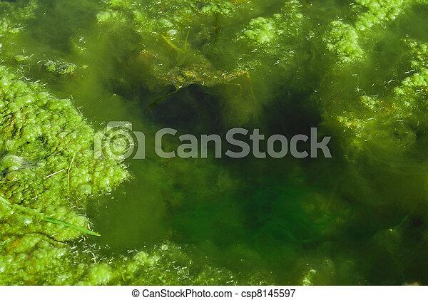 teich algen wasser teich gr n algen bild suche foto clipart csp8145597. Black Bedroom Furniture Sets. Home Design Ideas