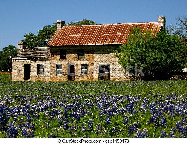 Bluebonnets de Texas - csp1450473