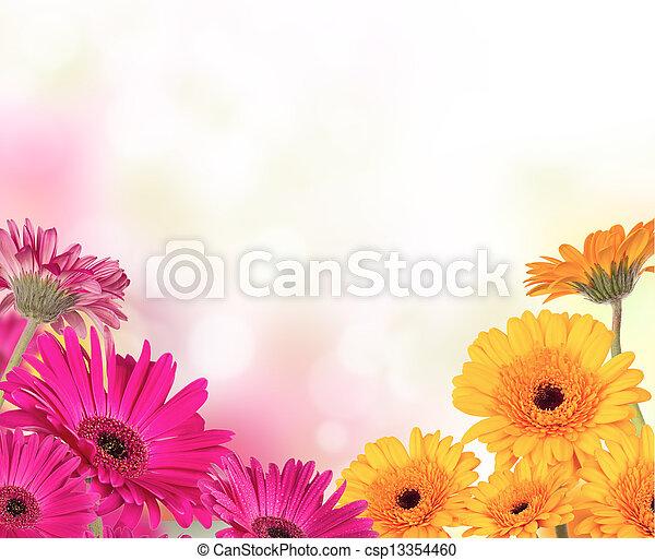 tekst, bloemen, gerber, kosteloos, ruimte - csp13354460