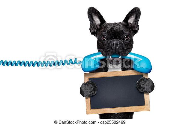 telefon, hund, telefon - csp25502469