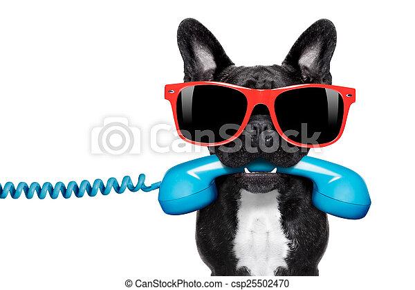 telefoon, dog, telefoon - csp25502470