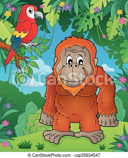 tema, imagem, orangotango - csp35634547
