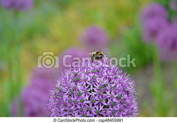 temps ressort, abeille - csp48455991