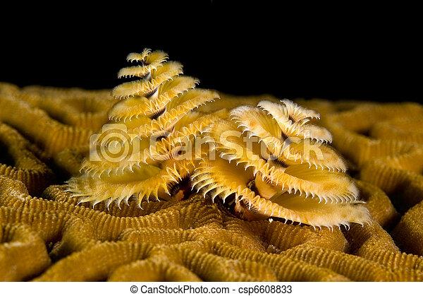 Tengeri gyurusfereg. A legijesztőbb tengeri féreg   Érdekes Világ