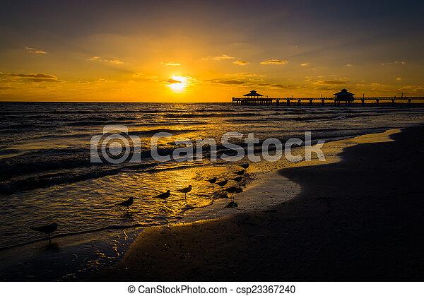 tengerpart, florida, sirály, napnyugta, halászat, myers, móló, erőd - csp23367240