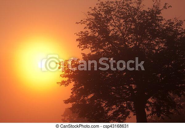 Tengu mountain Sunrise - csp43168631