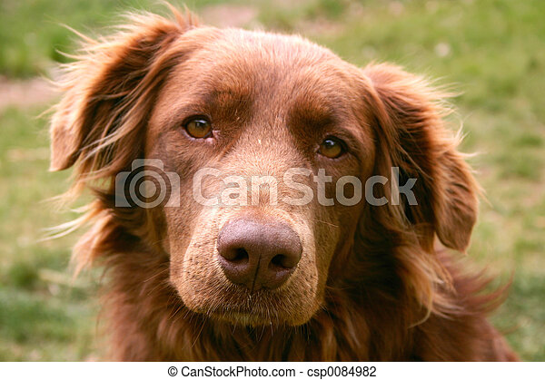terapi, hund - csp0084982