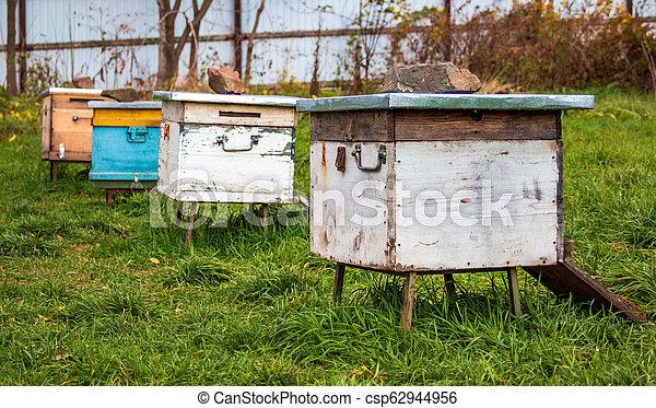 Beehives en el apiario. Completo de la temporada de verano de la colección de miel - csp62944956