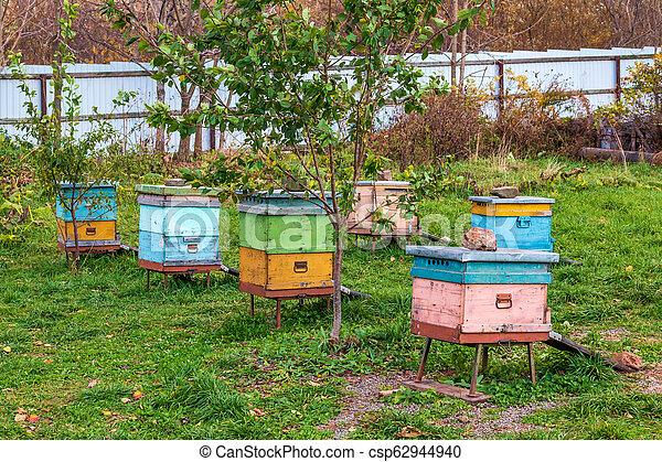 Beehives en el apiario. Completo de la temporada de verano de la colección de miel - csp62944940