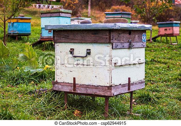 Beehives en el apiario. Completo de la temporada de verano de la colección de miel - csp62944915