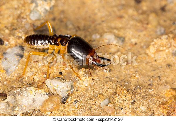 Termites soldier - csp20142120