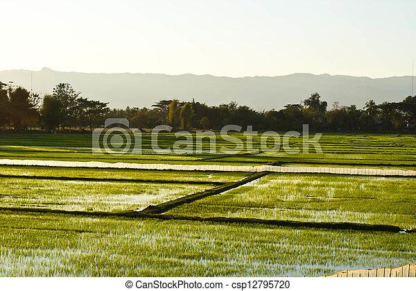 Terrace rice fields in evening sunset - csp12795720