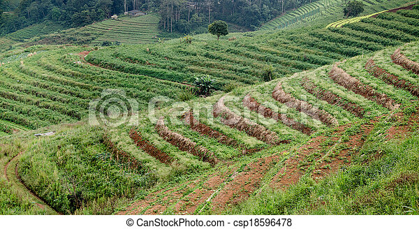 Terraced rice field after harvest - csp18596478