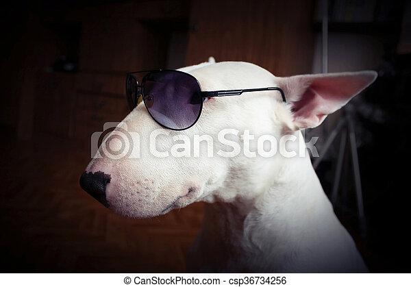 5627539cdc79d Terrier