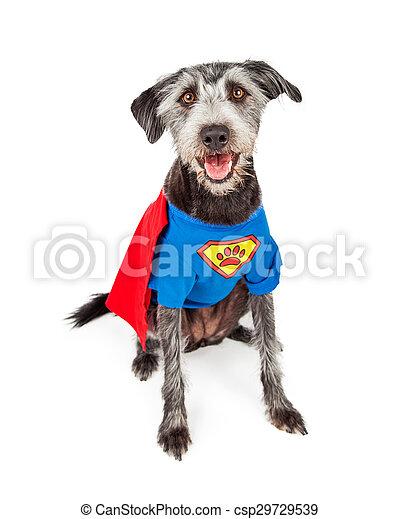 Terrier Héros Chien Super Heureux Mignon Terrier Héros