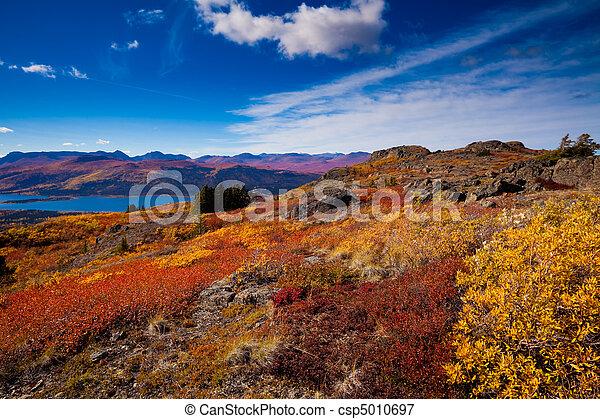 território, canadá, peixe, lago, yukon - csp5010697