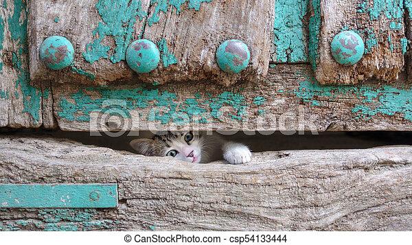 testa, vecchio, gamba, legno, gattino, attraverso, piccolo, porta, buco - csp54133444