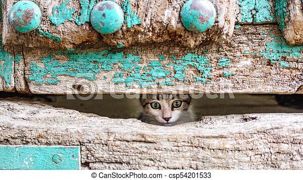 testa, vecchio, legno, gattino, attraverso, piccolo, porta, buco - csp54201533