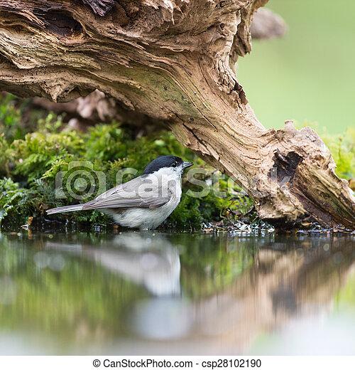 Teta de pantano en árbol - csp28102190