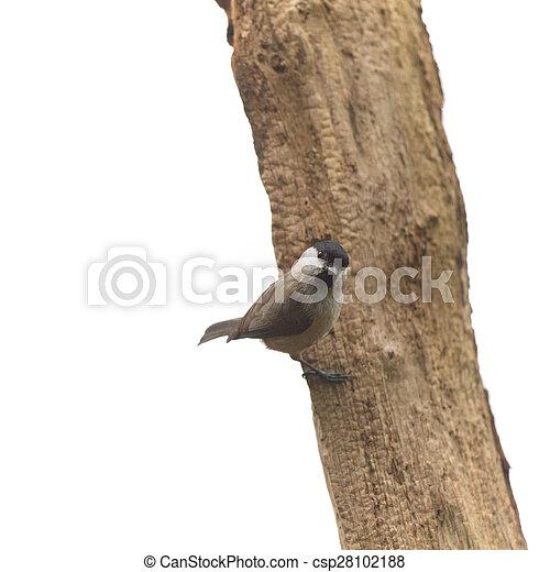 Teta de pantano en árbol - csp28102188