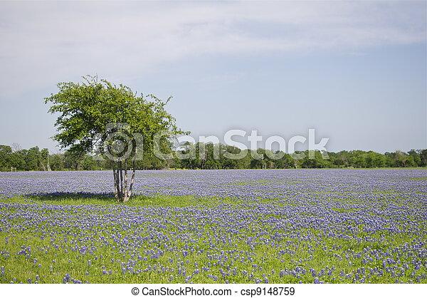 Un solo árbol y azules en Texas - csp9148759