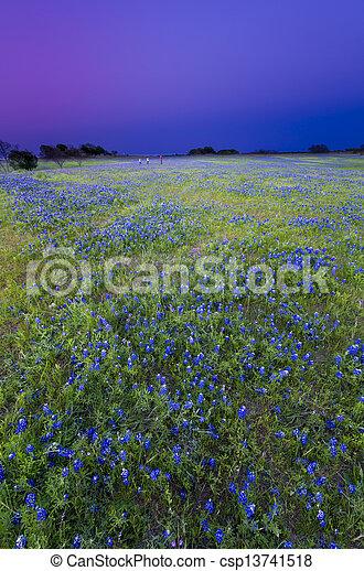 Texas Bluebonnets at Dusk - csp13741518