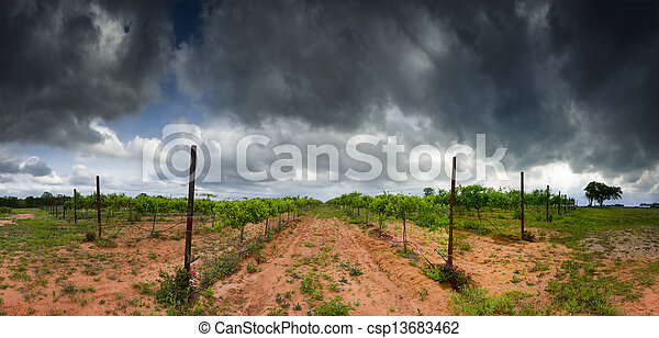 Texas Hill Country Vineyard - csp13683462