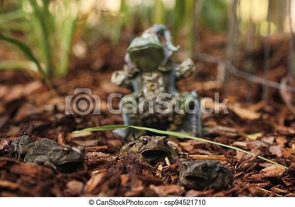 Texas Toads - Anaxyrus speciosus - With Statue of Frog King in Background - csp94521710