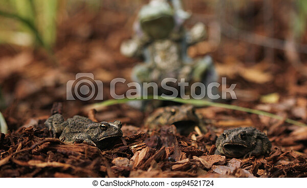Texas Toads - Anaxyrus speciosus - With Statue of Frog King in Background - csp94521724