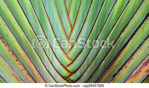 texture and pattern detail banana fan - csp29457926