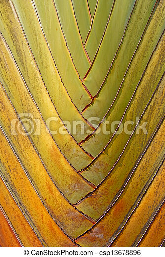 texture and pattern detail of banana fan - csp13678896