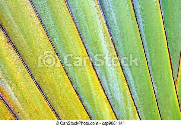 Texture banana - csp9081141