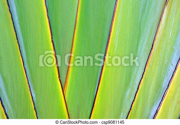 Texture banana - csp9081145