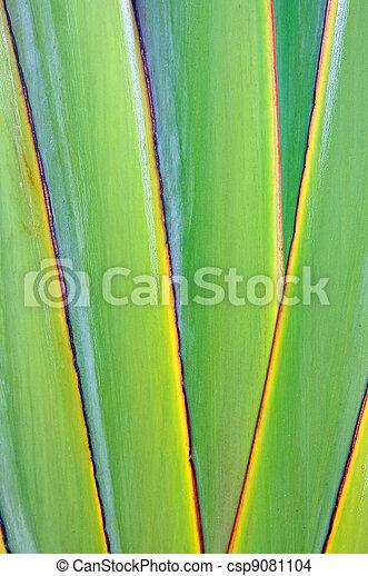 Texture banana - csp9081104