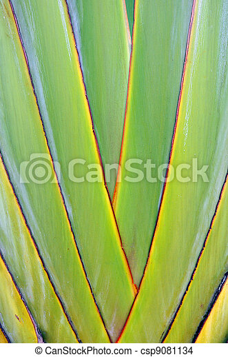 Texture banana - csp9081134